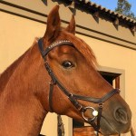 Arena Diva Rose Gold Anatomic Bridle Tackshop