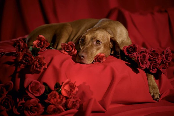 Cute And Romantic Wallpapers Feel Them 14 Dogs Show You How To Get Valentine S Day Right World