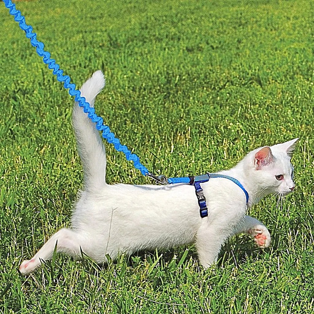 Petsafe With Kitty Easy Walk Harness & Bungee