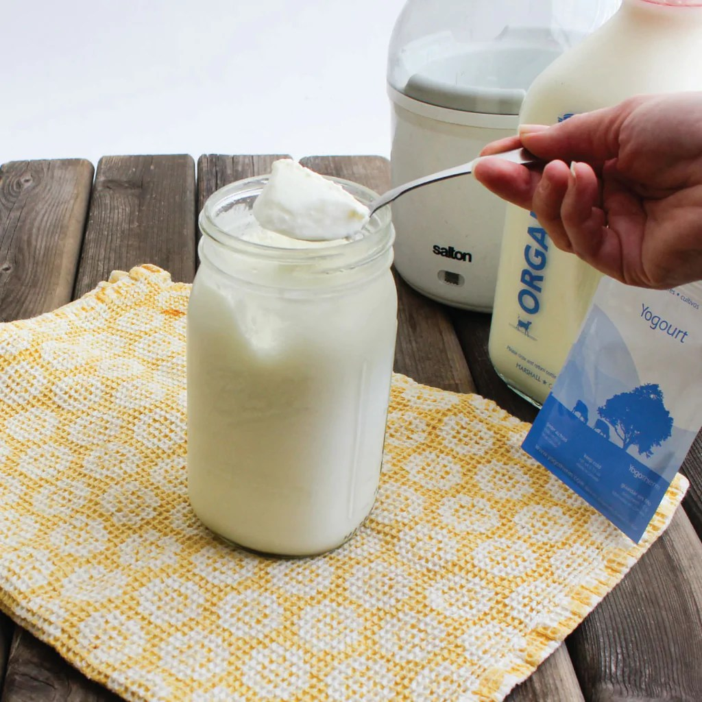 Homemade Yogurt Youre Doing it Wrong  FARMcurious