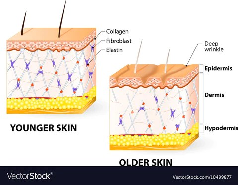 Collagen Will Save Your Skin! 2
