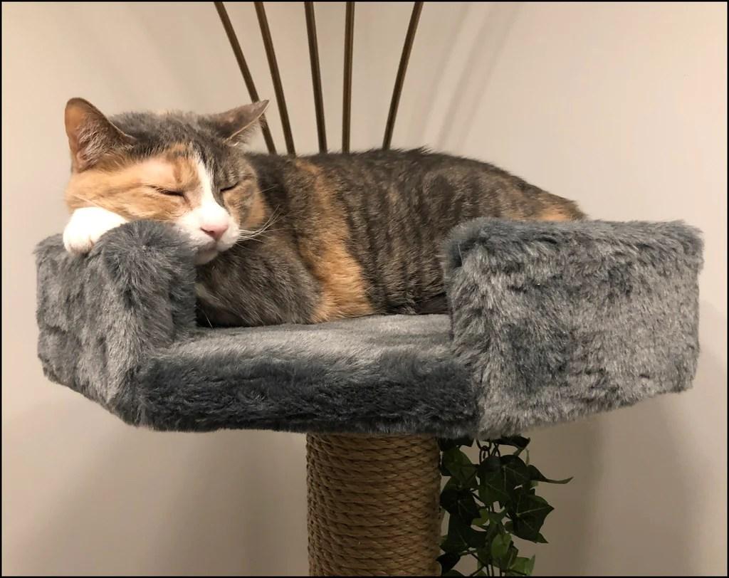 luxury cat beds high
