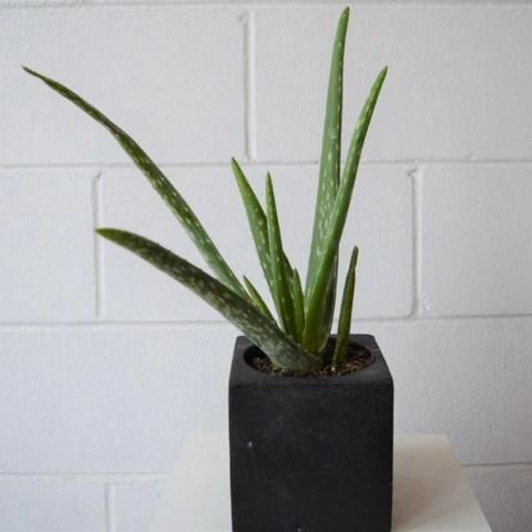 10 Magnifiques Plantes Qui Se Plairont Dans Votre Salle De Bain Avec O Folia Design