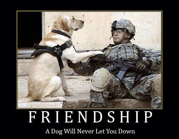 Bad Boy Quotes Wallpaper Friendship A Dog Will Never Let You Down Extremely