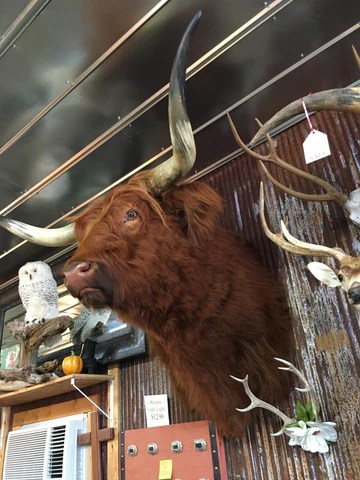 Mounts  Critters Taxidermy  Yee Haw Ranch Outfitters