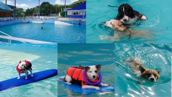 炎炎夏日就是要帶狗狗去游泳!大臺北游泳好所在大評比! | Furbo 丟零食狗狗攝影機