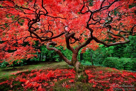 Portland Or Fall Had Wallpaper Us Scenics Sawusch Photography Fine Art Landscapes And