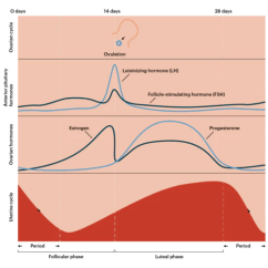 Menstrual Cycle Diagram With Ovulation What Is A Network Topology How Birth Control Pills Affect Your Period Women S Health Thinx Blog The Pill Made Of Synthetic Hormones Most Commonly Mix Estrogen And Progestin Which Name For Progesterone