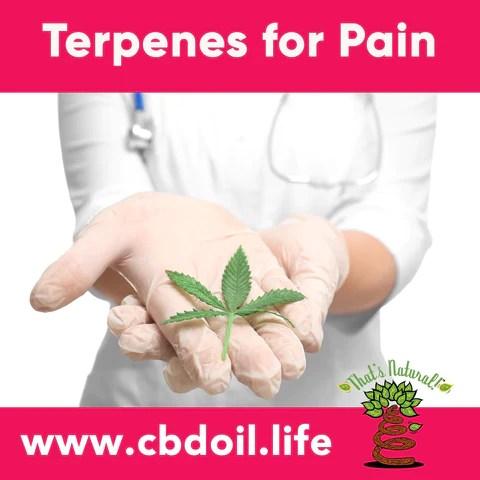 terpenes for pain, terpene profile, terpenoids - hemp-derived CBD, legal hemp CBD, The That's Natural terpene profile includes: beta-myrcene, linalool, d-limonene, alpha-pinene, humulene, beta-caryophyllene - more from Thats Natural at www.cbdoil.life, cbdoil.life, and www.thatsnatural.info and find us an our Life Force Market outside of Basalt, Colorado in the Aspen Valley next to the Willits Gas Station CBD Distillery, best-rated CBD, Alex Jones, Glenn Beck, CW Botanicals #ThatsNatural #lifeforce #cbd #cbdoil