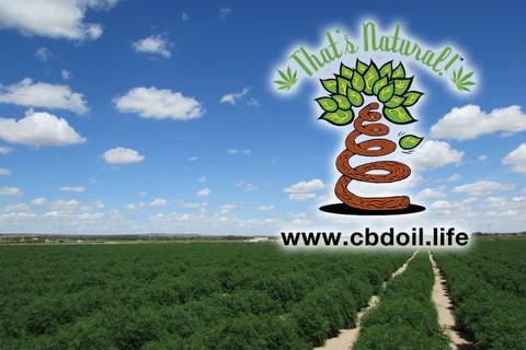 CBDA, CBDA oil - family-owned CBD company, legal hemp CBD, hemp legal in all 50 States, hemp-derived CBD, Thats Natural topical CBD products, CBDA, CBDA Oil,  ncreate Life Force with biodynamic Colorado hemp - That's Natural CBD Oil from hemp - whole plant full spectrum cannabinoids and terpenes legal in all 50 States - www.cbdoil.life, cbdoil.life, www.thatsnatural.info, thatsnatural.info, CBD oil testimonials, hear from customers of CBD oil products