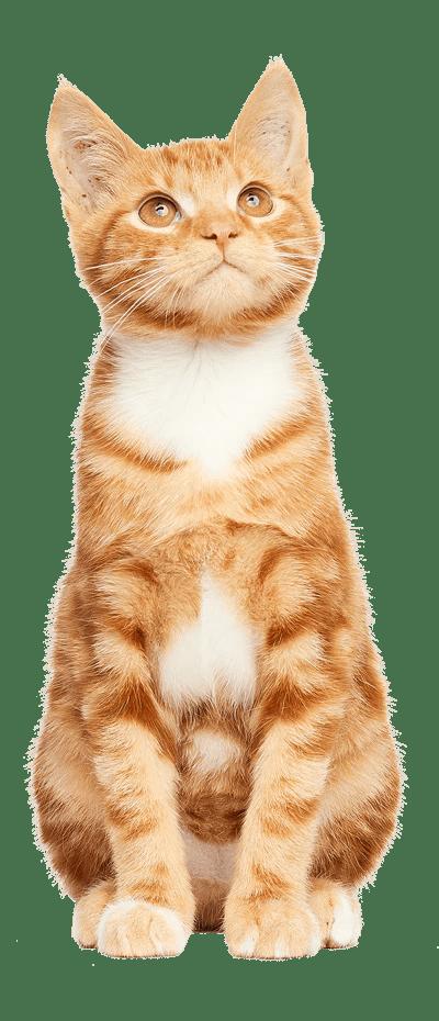 Free Kittens In Yakima : kittens, yakima, Supplies, Grooming, Stock, Petsense