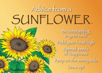 Christian Wallpaper Fall Happy Birthday Advice From A Sunflower Jumbo Magnet Your True Nature Inc