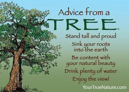 Advice from a Tree Jumbo Magnet  Your True Nature Inc
