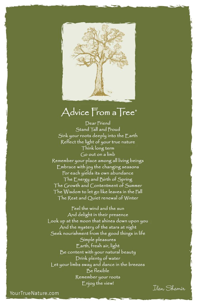 Advice from a Tree Frameable Art Postcard  Your True