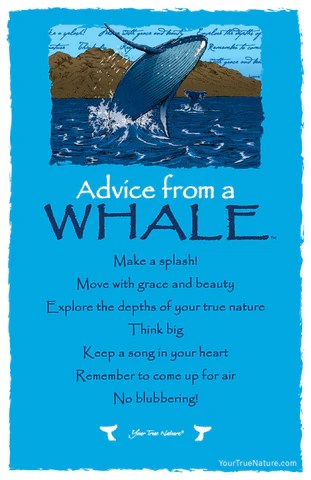 Advice from a Whale Frameable Art Postcard  Your True Nature Inc