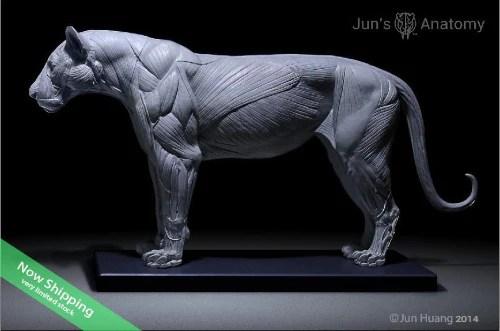 cheetah anatomy diagram commando alarm wiring lion model 1/6th scale - flesh & superficial muscle – jun's