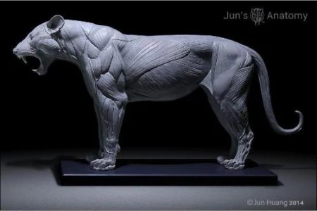 Lion Anatomy Model openmouth