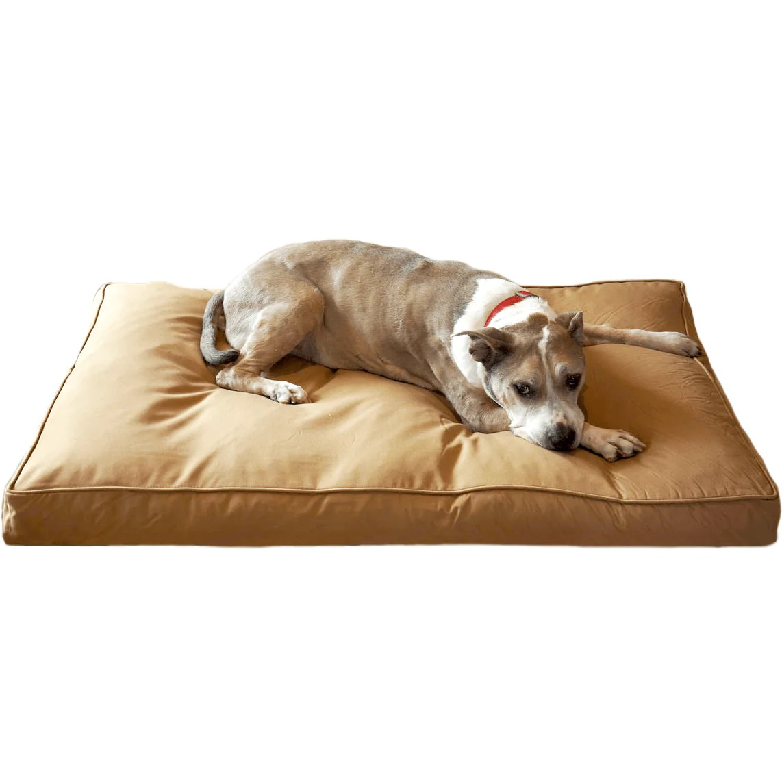 chew resistant dog bed with 200 day guarantee