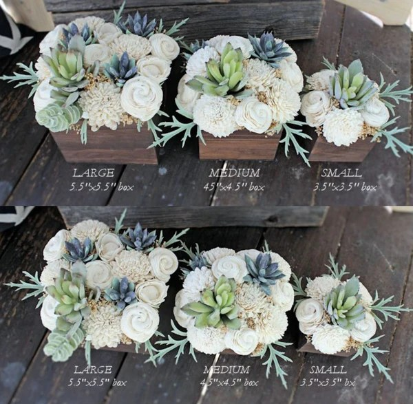 Mini Succulents Sale