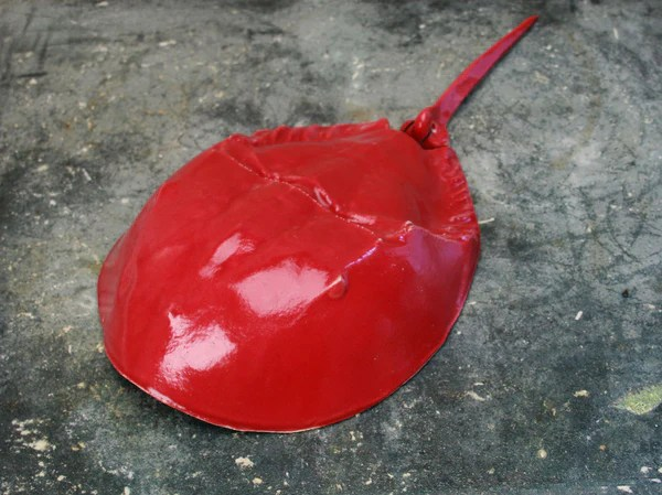 kitchen utensil caddy las vegas strip hotels with horseshoe crab - red – chatham pottery