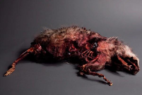 Roadkill Animal Prop  Dapper Cadaver Props