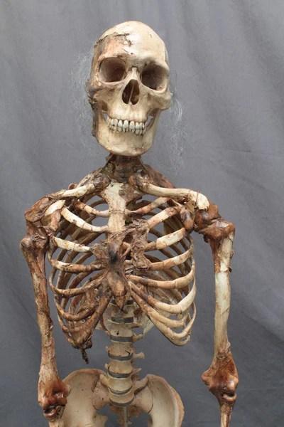 Skin and Bones Skeleton  Dapper Cadaver Props