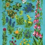 British Wildflowers Tea Towel Todryfor