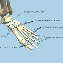 Joints Of The Foot Diagram Wiring A Photocell Switch Classification In And Ankle Mass4d Insoles