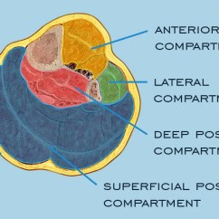 Top Of Foot Pain Diagram Pj 068 Wiring What Is Compartment Syndrome The Lower Limbs?