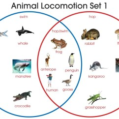 Venn Diagram Answers About Animals 110 Volt Thermostat Wiring Animal Locomotion  Montessori Materials By Lakeview