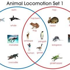 Beginner Venn Diagram Chrysler Wiring Radio Animal Locomotion  Montessori Materials By Lakeview