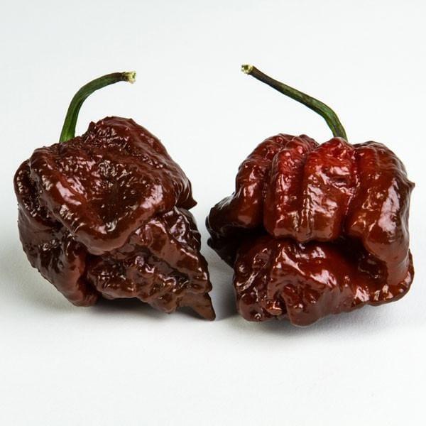 Chocolate Moruga Pepper  Pepper Joes  Pepper Joes