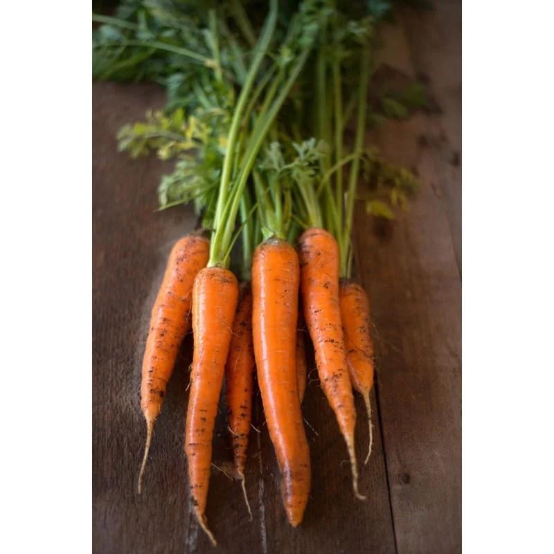 Danvers Half Long Carrot (Heirloom, 75 days)