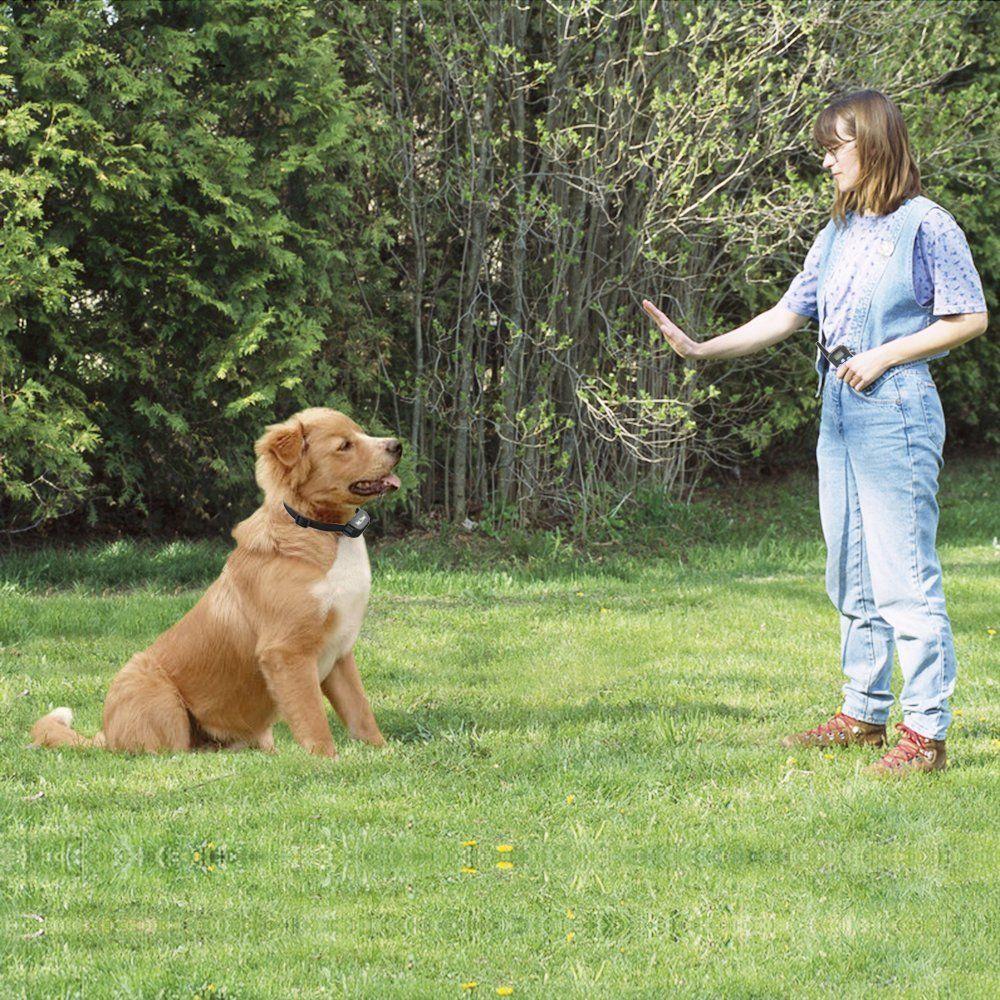 Dog Obedience Certificate Printable - Year of Clean Water