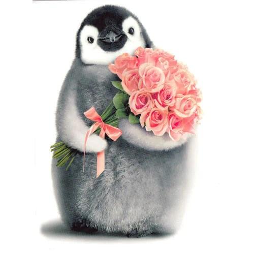 Penguin XO Birthday Card  Penguin Gift Shop