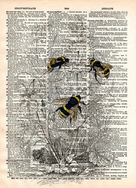 Bumblebee Illustration 1800 S Bee Wall Art Dictionary