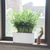 Indoor Plants Potted In Various Planters| Shop Online | My ...