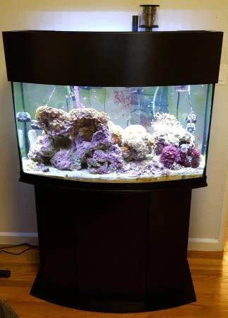 cheap fish tanks 5