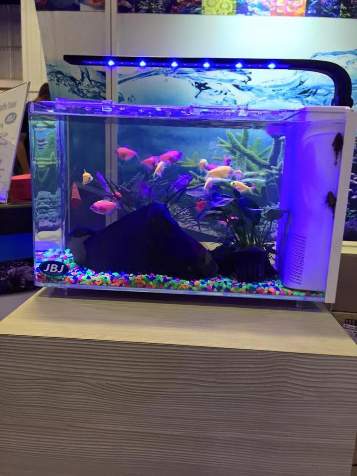 JBJ Rimless Desktop Aquarium Series  AquariumStoreDepot