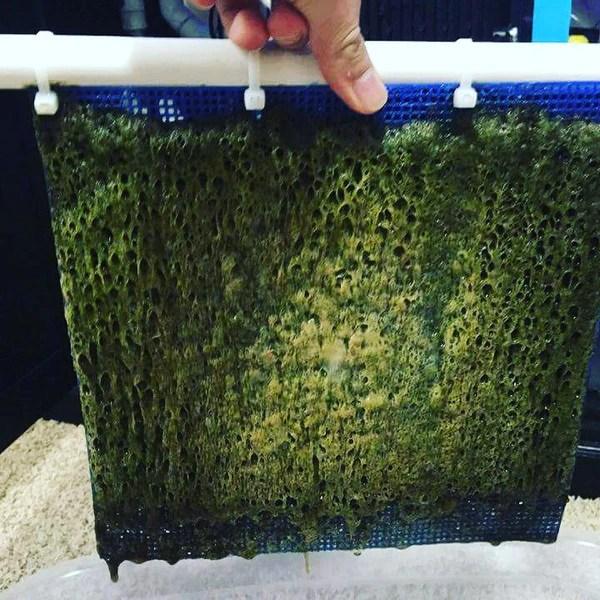 Algae Turf Scrubbers  AquariumStoreDepot
