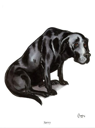 Sorry Iconic Labrador Dog Greeting Card By Bryn Parry