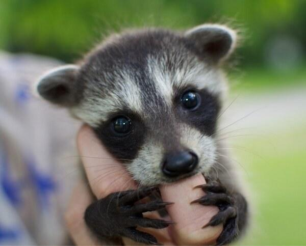 The World S Top 10 Cutest Wild Baby Animals In 2020 Homeoanimal Com