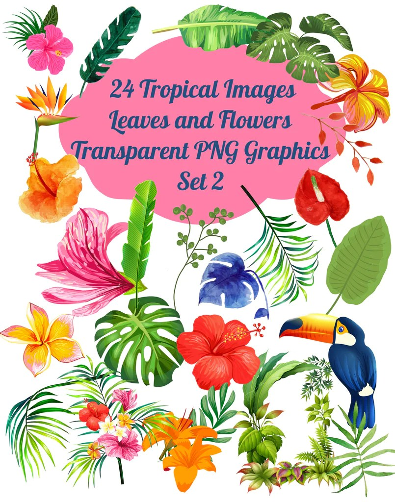 medium resolution of paper rose cottage 24 tropical flowers