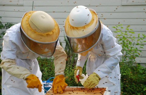 Host a Bee Hive in Your Backyard!
