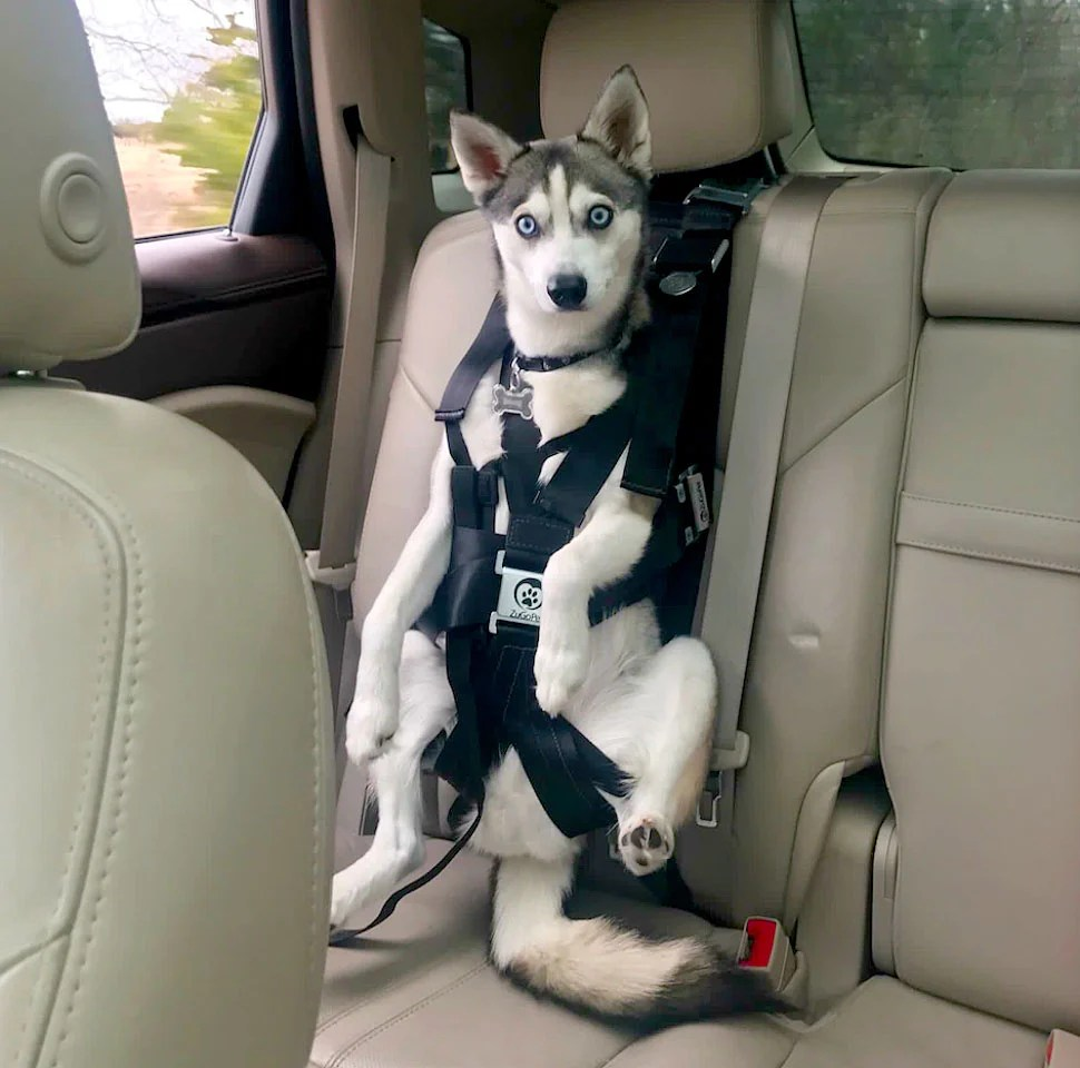 hight resolution of  the rocketeer pack multifunctional harness