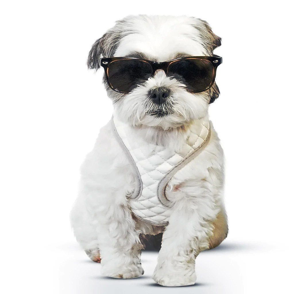 zugopet dog harness [ 1024 x 1024 Pixel ]