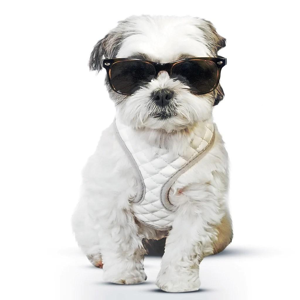 hight resolution of zugopet dog harness