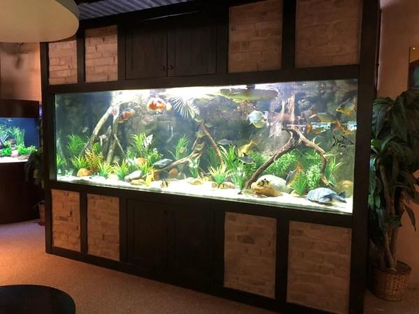 1250 Gallon Aquarium with Custom Brick Inlay and River