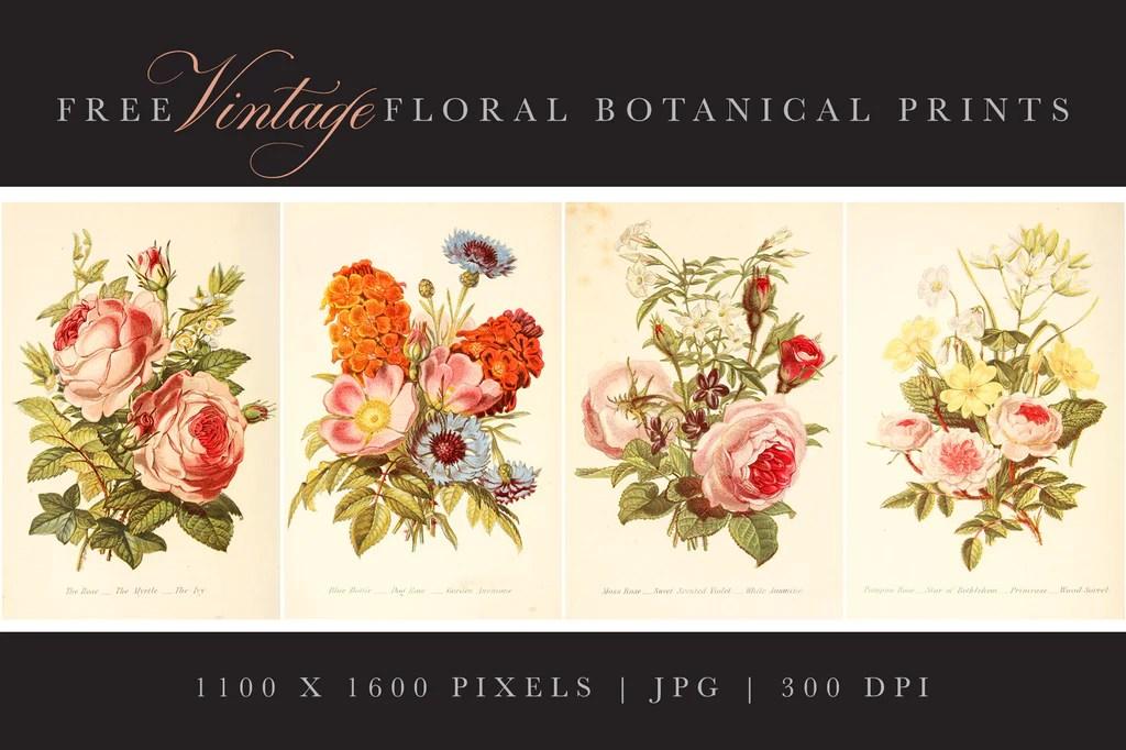 4 Free Vintage Floral Botanical Prints Avalon Rose Design