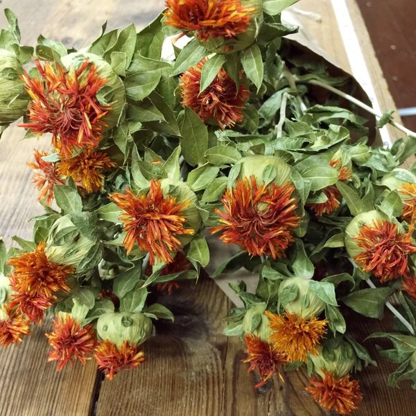 Orange Safflower  DIY Dried Flower Bundle  Dried Flowers